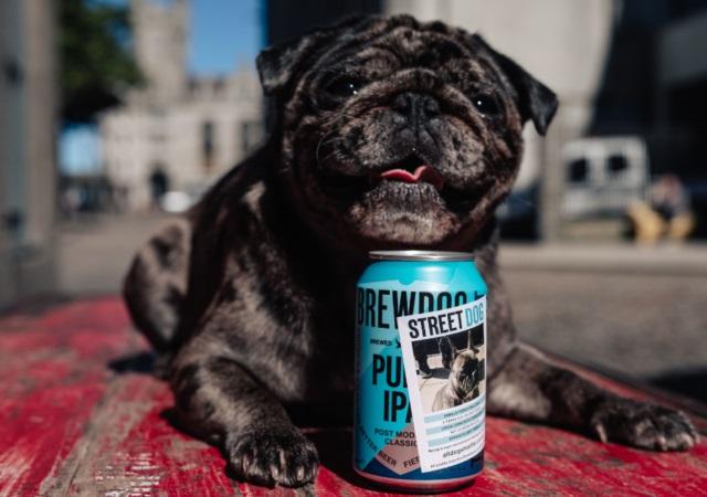 Cervejaria leva cães abandonados para latas