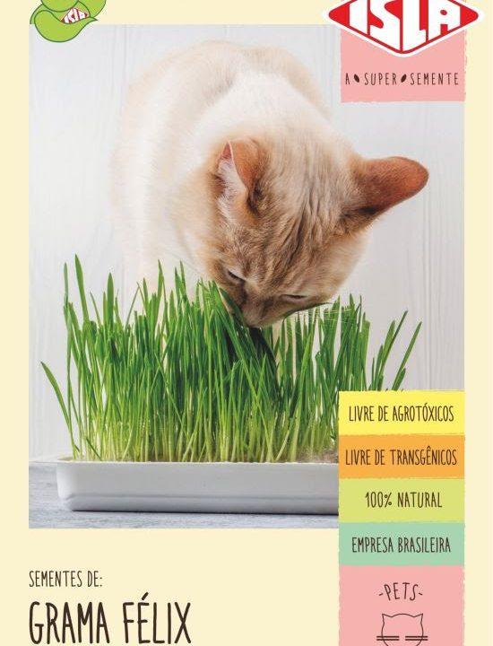 Graminha para gatos é a novidade da Isla Sementes